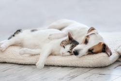 How to rent to pet owners and still have the perfect tenancy